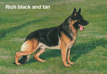 Melanistic Dog